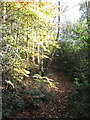 SJ6370 : Footpath in Woodland on Vale Royal Golf Course by Dr Duncan Pepper