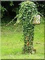 SO9202 : Ivy covered cross, St Luke's Churchyard by Maigheach-gheal