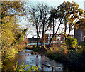 TQ1272 : River Crane, Crane Park Island by Des Blenkinsopp