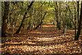 SU9486 : Staplefurze Wood by Graham Horn