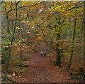 SU9484 : Burnham Beeches by Graham Horn