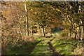 SD4708 : The track towards the River Tawd enters woodland by Ian Greig