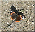SW6239 : Red Admiral at Merry Meeting by Graham Horn