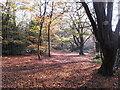 TQ4093 : November sunlight in Knighton Wood by Roger Jones
