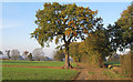 TL8001 : Oak, footpath marker, farm track by Roger Jones