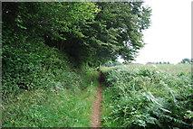 SU7824 : Sussex Border Path by N Chadwick