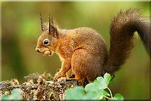 SZ5885 : Hazelnut for Breakfast by Peter Trimming