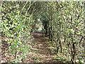 SU0426 : Blackthorn tunnel by Jonathan Kington
