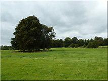 SU6017 : South Downs Society Green Travel Walks Week (206) by Basher Eyre