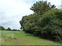 SU6017 : South Downs Society Green Travel Walks Week (207) by Basher Eyre