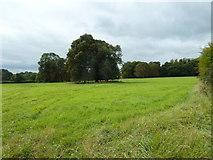 SU6017 : South Downs Society Green Travel Walks Week (210) by Basher Eyre