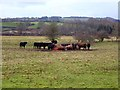 NY9165 : Cattle feeder near the Meeting of the Waters by Oliver Dixon