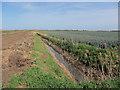 TL4281 : Onion field by Blockmoor Drove by Hugh Venables