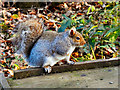 SD7406 : Squirrel at Moses Gate by David Dixon