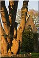 TQ2629 : Nymans and the Cedar by Ian Capper