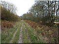 SO5299 : Track at the bottom of Lodgehill Coppice by Richard Law