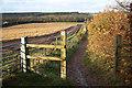 SK5656 : Fountain Dale bridleway by Richard Croft