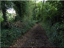 SU6017 : South Downs Society Green Travel Walks Week (231) by Basher Eyre