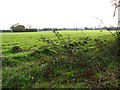TF9026 : Winter wheat near Oxwick by Evelyn Simak
