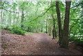 SU7927 : Sussex Border Path, Rake Hanger by N Chadwick