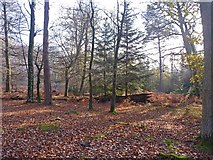 SU2609 : Autumn Scene at Wick Wood by Mike Smith