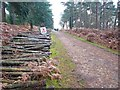 SU2509 : Log Pile near Puckpits Inclosure by Mike Smith