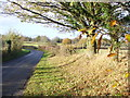 SU9050 : Roadside Verge, Harper's Road by Colin Smith