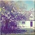 TL6759 : Saxon Wood Cottage, Saxon Street, near Newmarket by scarielle
