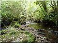 S1101 : Glenshane River, near Cappoquin by ethics girl