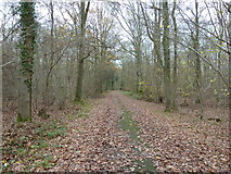 TQ1038 : Footpath in Buildings Wood by Dave Spicer