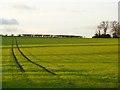 NZ2412 : Farmland, Manfield by Andrew Smith