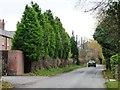 SJ7670 : Leylandii hedge hiding Cherry Tree Farm by Christine Johnstone
