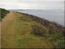 SX5645 : Coast path on Stoke Down by Philip Halling