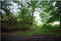 SU8429 : Footpath off the Sussex Border Path by N Chadwick