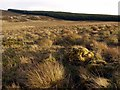 NY9594 : Landshot Hill towards Harwood Forest by Andrew Curtis