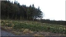 NT0442 : Christmas tree plantation, Cockburn Law by Richard Webb