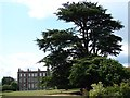 TF4666 : Cedar of Lebanon at Gunby Hall by Ian Paterson