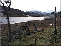 NN6795 : Damaged by December gales by Alan Reid