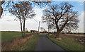 TL8804 : New Hall Lane by Roger Jones