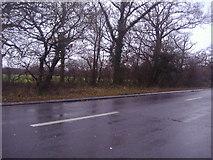 TQ1661 : Fairoak Lane, Malden Rushett by David Howard