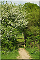 TQ2642 : Stile through the hedge by Ian Capper