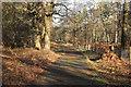 SK6368 : Lane to The Buck Gates by Richard Croft