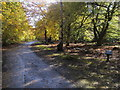 SU9485 : Halse Drive by Woods Drive by Shaun Ferguson