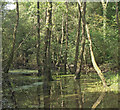 SS8984 : Wooded pool between Tondu and Brynmenyn by eswales