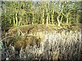 SK4556 : Moats in Castle Wood by Antony Dixon