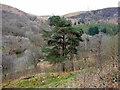 SN9167 : Near Penygarreg Dam, Elan Valley, Mid-Wales by Christine Matthews