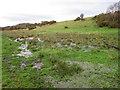SJ6469 : Marshland alongside the Weaver by Stephen Craven