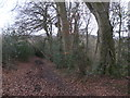 SU7899 : Public footpath through Neighbour's Wood by Peter S