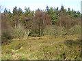 SE5182 : Kilburn Moor Plantation by Pauline E