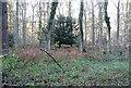 SU5553 : Hay Wood by Graham Horn